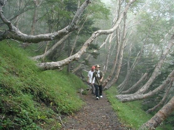 富士山・宝永火山の火口巡りCコース。富士山・宝永火山の火口巡りコース。