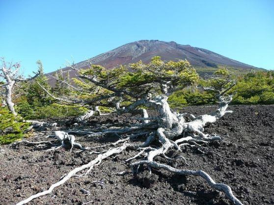 富士山・お中道・奥庭・御庭・大沢崩れEコース。◆富士山・お中道・奥庭・御庭・滑沢崩れEコース。