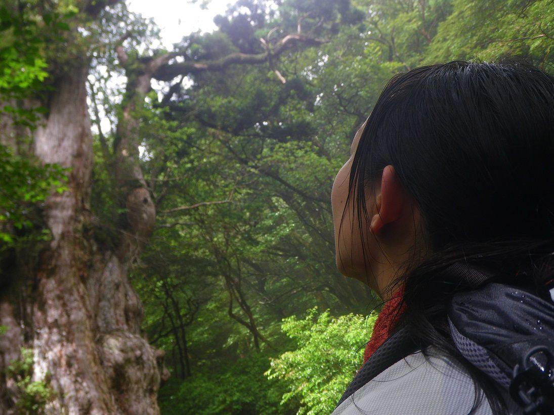 日帰り縄文杉トレッキングツアー1名様からツアー開催 学割や人数割引あります縄文杉トレッキングツアー 1日コース