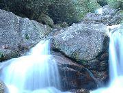 屋久島もののけの森・太鼓岩「白谷雲水峡ツアー」 1日コース 学割や人数割引あります!屋久島もののけの森・太鼓岩「白谷雲水峡ツアー」 1日コース