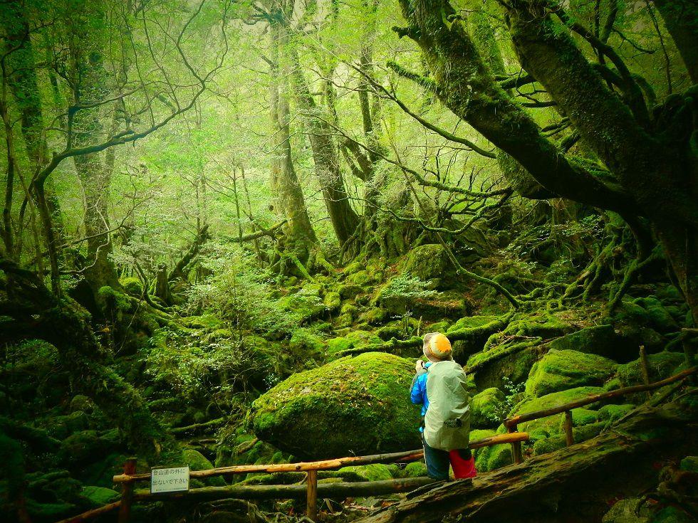 半日白谷雲水峡トレッキング(もののけの森まで)学割や人数割引あります!【午前の部】半日コース 白谷雲水峡トレッキング(もののけの森まで)
