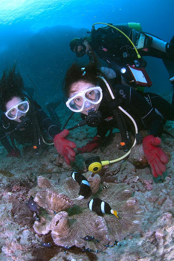 <屋久島・体験ダイビング>手軽に1ダイブコース!屋久島の美しい海を堪能しよう<1ダイブコース/AMコース8:00>初めての方もおすすめ!屋久島・体験ダイビング