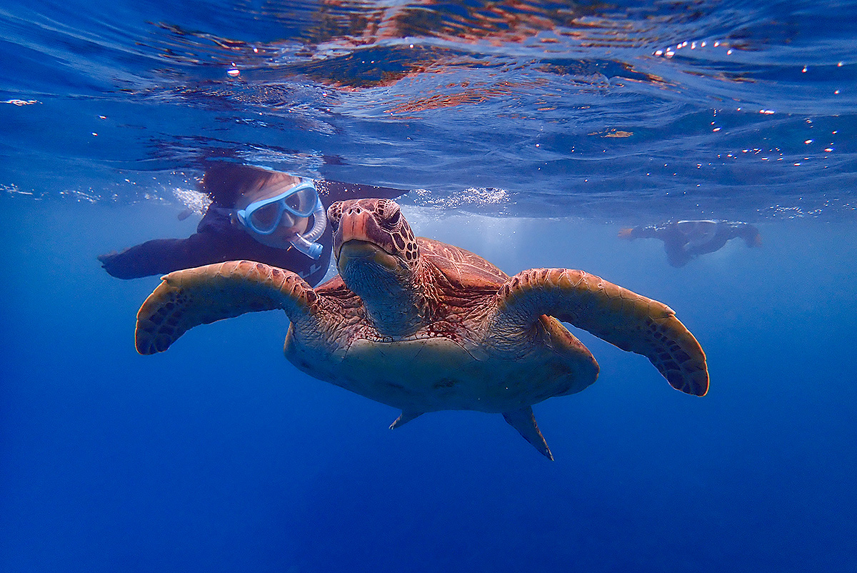 <屋久島・シュノーケリング>ウミガメを探そう!初心者歓迎のウミガメと泳ぐ屋久島の海を楽しむシュノーケリング【人数割引あり!】<8:00~>屋久島・シュノーケリング