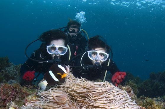 <屋久島・体験ダイビング>ロング1ダイブコース!高いウミガメ遭遇率!沖に出てウミガメと泳げる体験ダイビング【人数割引あり!】<8:00~>初めての方もおすすめ!屋久島・体験ダイビング
