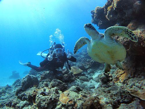 屋久島の海で体験ダイビング♪屋久島 体験ダイビング【半日1ダイブ午前】