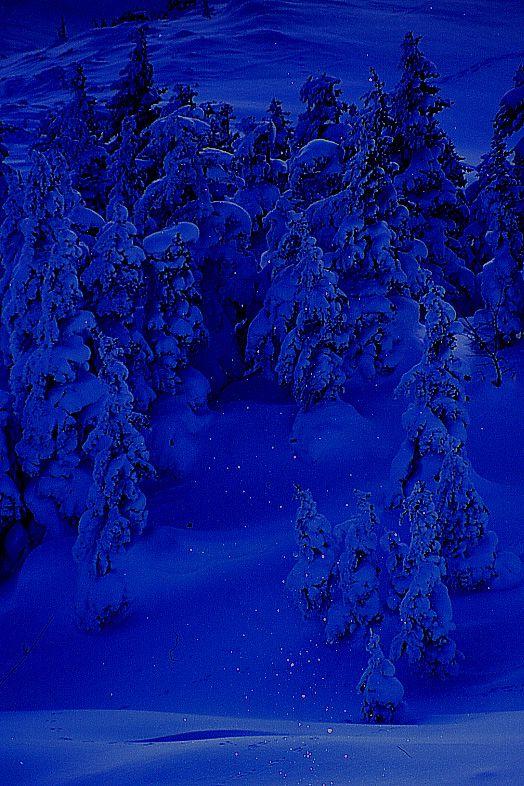 ホテル送迎付!森と星の散策と雪の露天風呂送迎付き!森と星の散策と雪の露天風呂