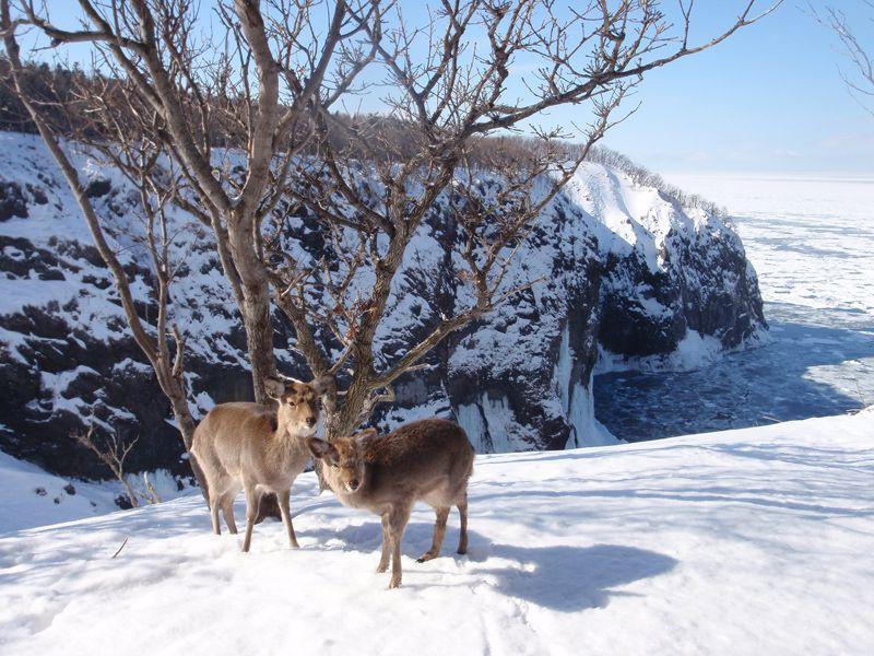 原生林スノーシュートレッキング ~雪上に新たな足跡を残す~原生林スノーシュートレッキングAM