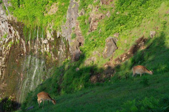 フレペの滝ネイチャーウォッチングフレペの滝ネイチャーウォッチング