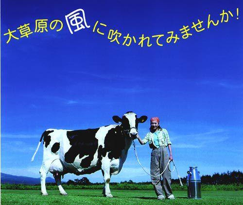 牧場をまるっと味わおう♪教育ファーム半日牧場体験コース≪昼食付き≫牛さんや牧場についてみんなで学ぼう!教育ファーム半日牧場体験コース≪昼食付き≫