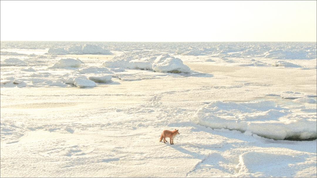 流氷浴。イスを置き、寝袋で世界自然遺産知床の流氷を眺める!【10:00開始】流氷浴。イスを置き、寝袋で世界自然遺産知床の流氷を眺める!