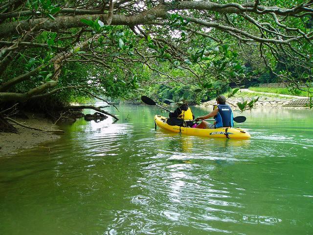 【嘉手納(中部)発】亜熱帯の自然が広がる比謝川でマングローブ探検カヤックツアー!比謝川マングローブ【カヤック】