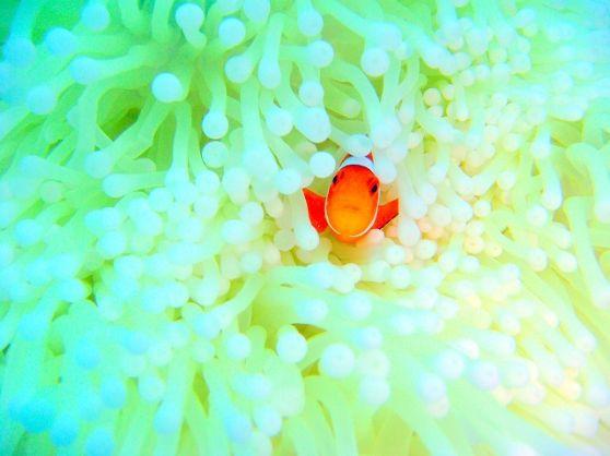 【 美ら海水族館から車で10分の瀬底島☆ 】の美ら海を手軽に海に潜りたいなら、シーウォーカーに決まり!!<<シーウォーク>>宇宙飛行士気分で海中散歩♪ 瀬底島の美ら海でシーウォーカー!