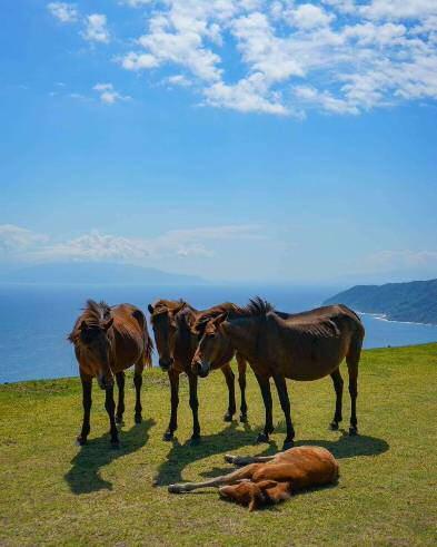 【宮崎県】御崎馬とあなたの感動的出逢いを御崎馬(みさきうま)とあなたの感動的出逢いを