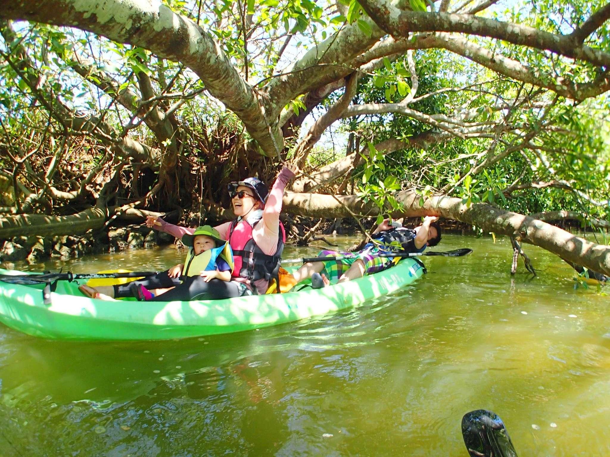 1歳から出来る!熱帯ジャングルマングローブのカヤック探検!熱帯ジャングルマングローブのカヤック冒険