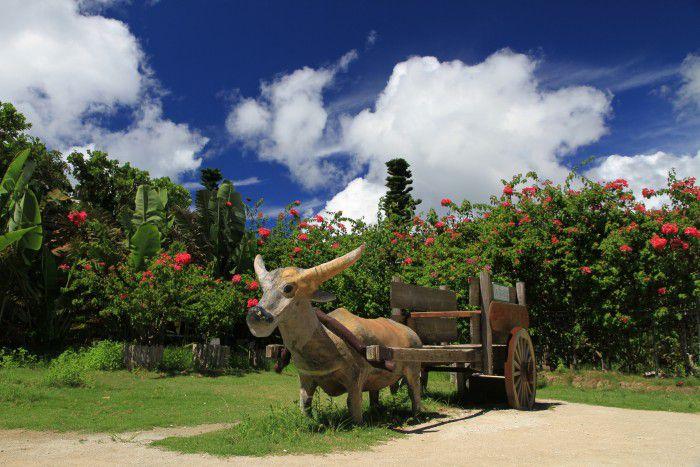 【安栄観光・〈フリープラン西表島〉 由布島水牛車観光】〈フリープラン西表島〉 由布島水牛車観光