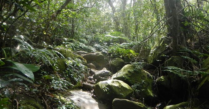 《平田観光》西表島カヌー&トレッキングで行く「サンガラの滝」コース※西表島までの往復乗船券付き西表島カヌー&トレッキングで行く「サンガラの滝」コース