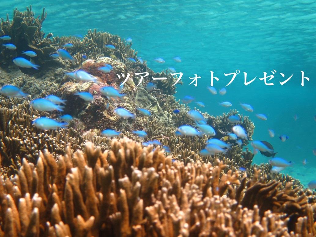 【宮古島・シュノーケリング】貸切プライベートツアー♪3才から楽しめる!ニモと珊瑚、宮古ブルーを満喫【8:00~】貸切プライベートツアー♪3才から楽しめる!ニモと珊瑚、宮古ブルーを満喫