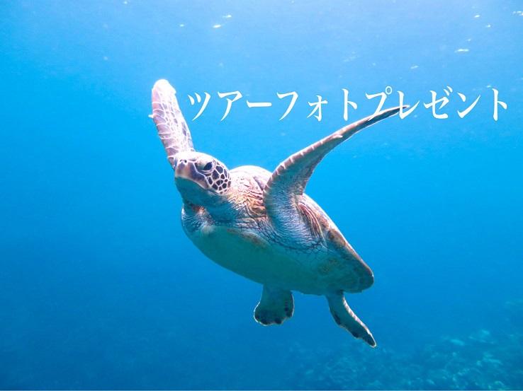 【宮古島・シュノーケリング】貸切プライベートツアー♪可愛いウミガメに会いに行く☆ワクワクシュノーケルコース【8:00~】貸切プライベートツアー♪可愛いウミガメに会いに行く☆ワクワクシュノーケルコース