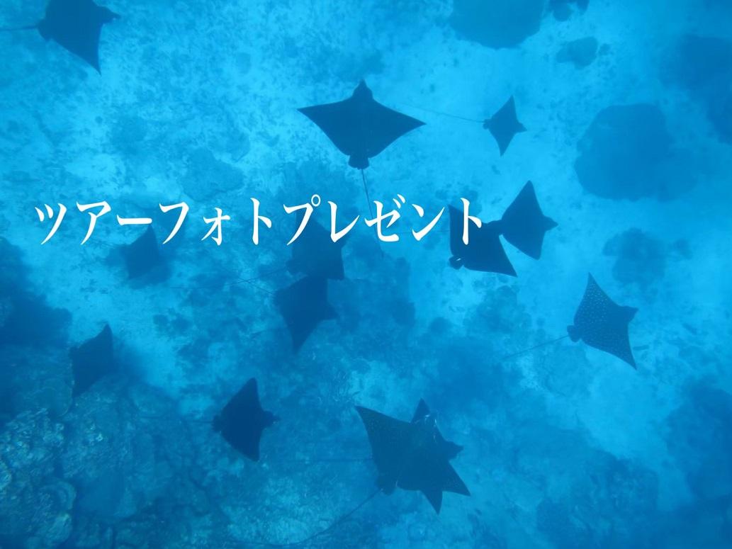 【宮古島・素潜り経験者】完全貸切♪ウミガメのちサメ時々マダラトビエイ!深めポイントでスキンダイビング【8:00~】完全貸切♪ウミガメのちサメ時々マダラトビエイ!深めポイントでスキンダイビング