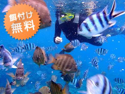 <沖縄・シュノーケリング/ダイビング>カラフルな熱帯魚達が集まる楽園へ ~熱帯魚コース~<シュノーケリング>熱帯魚コース