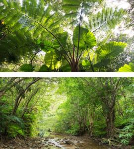 <沖縄・トレッキング>ヤンバルのオアシスター滝*亜熱帯の木々を鑑賞しながらトレッキング!ター滝トレッキングコースター滝トレッキングコース
