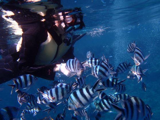 青の洞窟+魚の餌付けセット!お手軽・格安シュノーケリングコース【8:00便】青の洞窟+魚の餌付けセット!お手軽・格安シュノーケリングコース