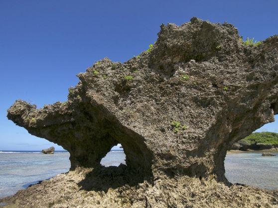 【恩納村(本島北部)開催/約2.5時間】|珊瑚礁リーフトレッキング&シュノーケル【完全貸し切り制】8:00集合/珊瑚礁リーフトレッキング&シュノーケル【完全貸し切り制】
