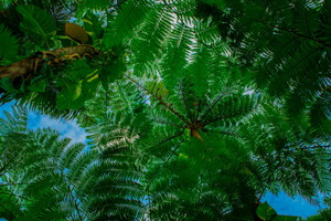 【やんばる(本島北部)開催/約3時間】やんばる清流リバートレッキング| 大自然の森に包まれ、清流の川を登り秘境の滝へ!9:00集合/やんばる清流リバートレッキング