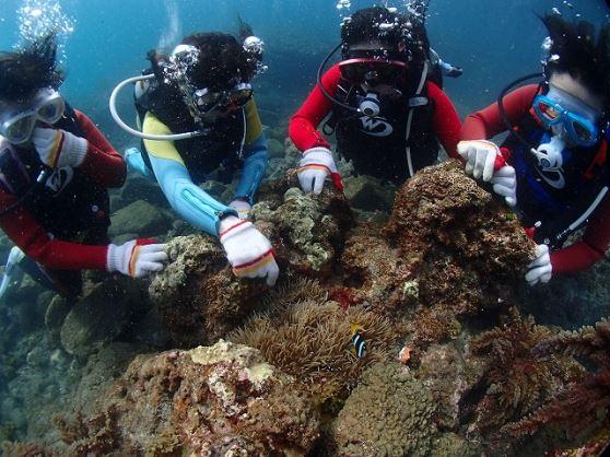 体験ダイビング 屋久島の海で体験ダイビングしよう!体験ダイビング 【1ダイブコース 08:00】(通常10,000円)