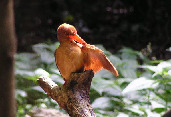 うぷきの森探検<1.早起き鳥さんぽ/ヘルシーウォーク>うぷきの森探検 <1.早起き鳥さんぽ>