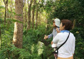 うぷきの森探検<2.亜熱帯の花と生き物さんぽ/季節の花や生き物たちと出会う>うぷきの森探検 <2.亜熱帯の花と生き物さんぽ>