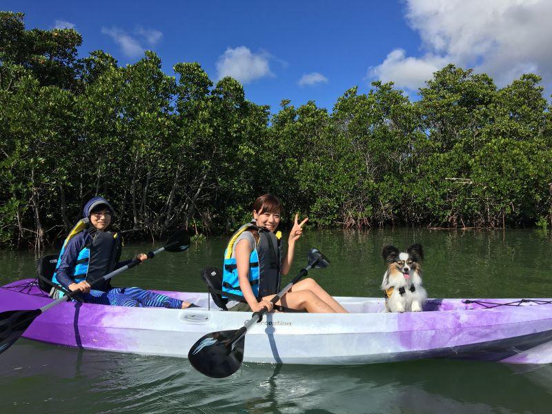 マングローブカヌー【石垣島/カヌー/マングローブ】マングローブカヌー<のんびり、ゆっくりマングローブを見ながら水面散歩>