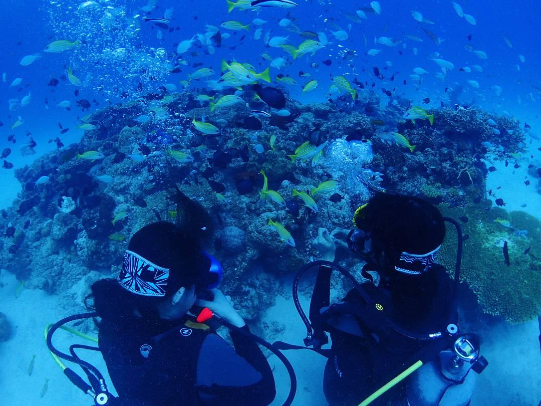 沖縄本島北部・山原(やんばる)の綺麗な海で体験ダイビング♪ビーチエントリーなので初めての方や泳げない方も安心してご参加いただけます!親切・丁寧にレクチャーいたしますのでご安心ください♪【1日3便運行】沖縄本島北部・山原で体験ダイビング♪ 9:00~