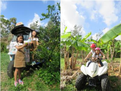 東村やんばるアドベンチャーファームツアー@又吉コーヒー園【9:30】東村!TUKTUK&バギー観光農園ツアー