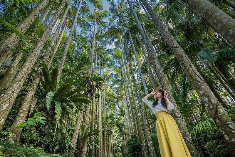 【最大170円割引】東南植物楽園 クーポン(入園)【10%OFFでおトク♪】東南植物楽園 入園料