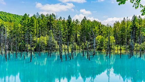 Blue Pond in Biei