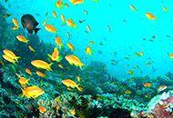 Okinawa snorkeling