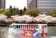 Duck Tour / Cherry blossum