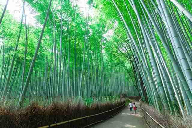 <BE>京都一日~天龍寺と竹林嵐山・伏見稲荷・金閣寺~