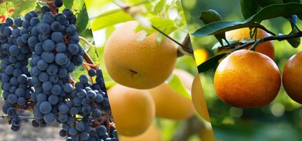 果物狩りツアー