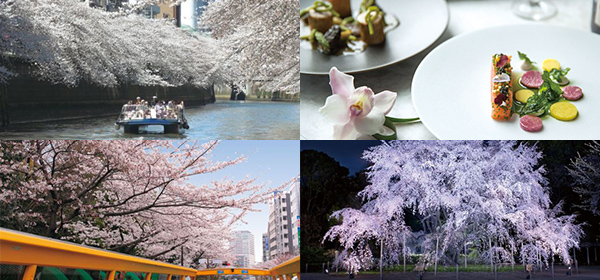 東京・お花見ツアー