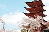 広島桜ツアー
