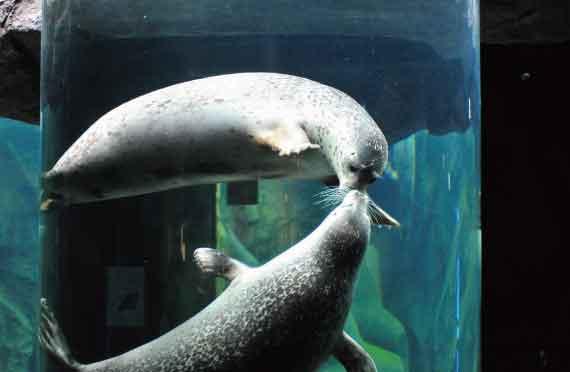 旭山動物園3時間滞在と美瑛青い池・ファーム富田をめぐる欲張りプラン