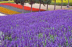 富良野ラベンダー畑散策と美瑛・神秘的な青い池を訪ねる旅【1名2席利用!】