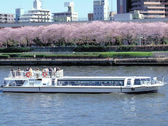 東京 お花見ツアー