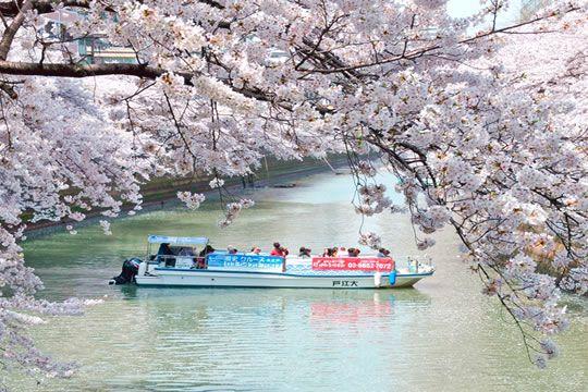 【天王洲乗船】目黒川桜回廊クルーズ
