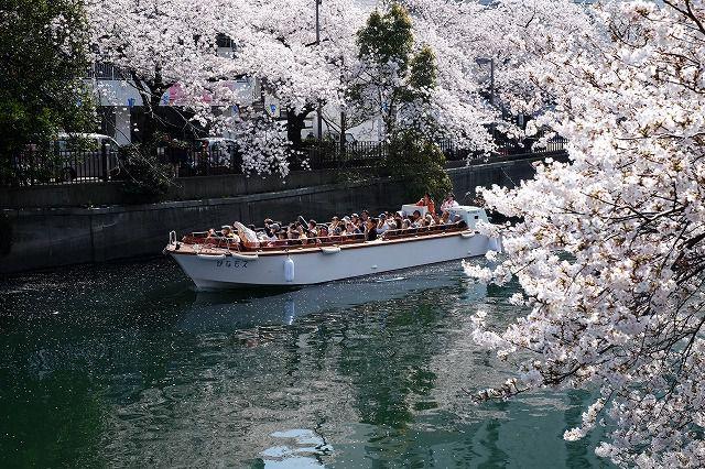 横浜 お花見ツアー