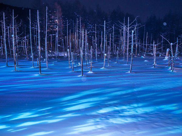 冬の旭山動物園とライトアップ青い池&白ひげの滝欲張りツアー