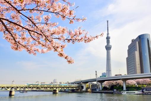 隅田川お花見CHANDONクルーズ201...の写真