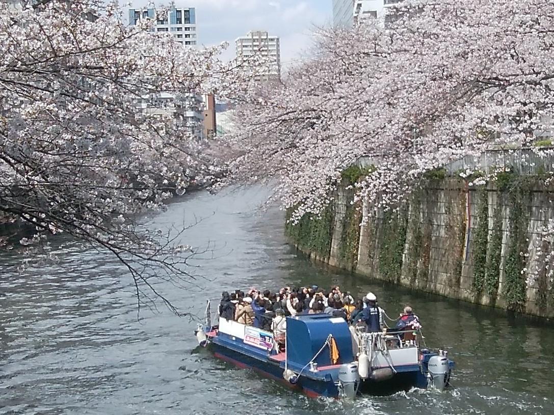 東京目黒川舟くだり桜お花見クルージング3月30日3月31日と4月1日8時15分 集合便